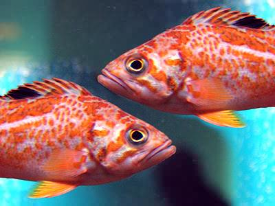 Two_Fishes_9853