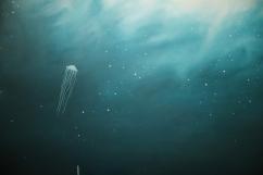Medusas y nebulosas, detail