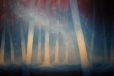 Golondrinas en el bosque (2013), 80cm X 120 cm, oil on canvas, Sabiana Paoli Art Gallery
